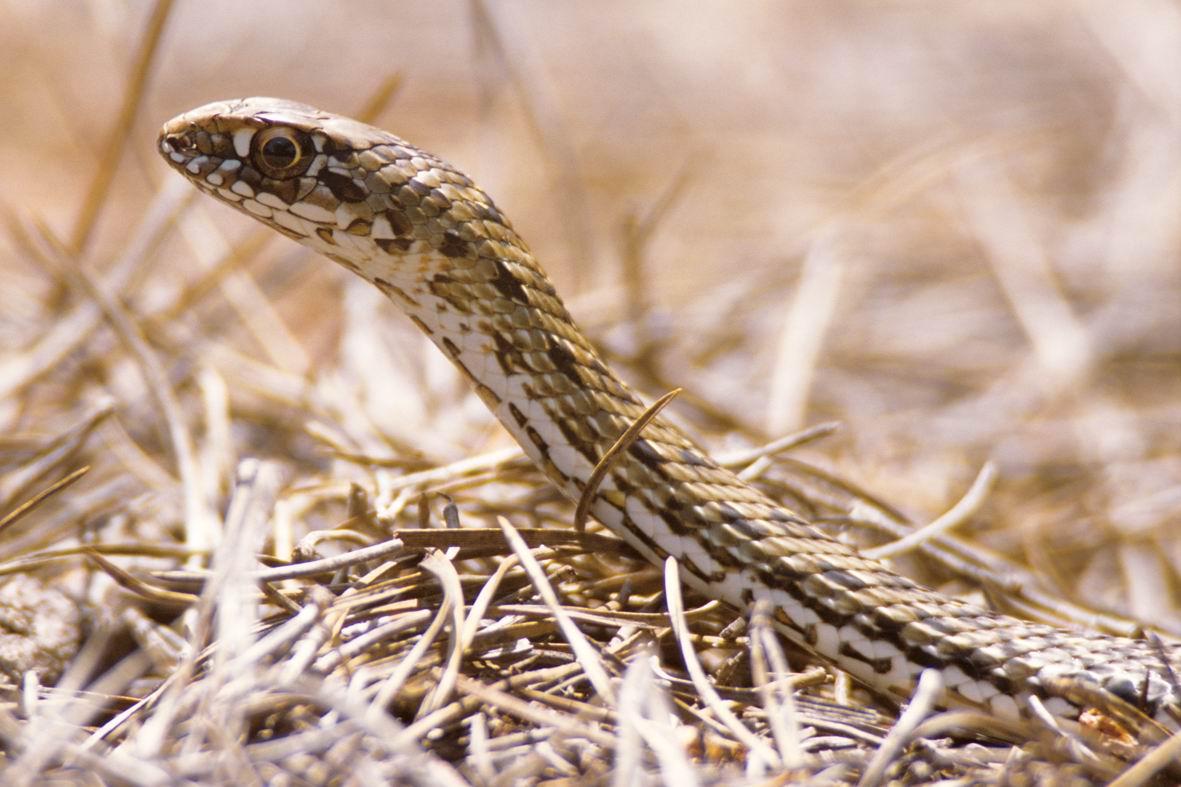 14-ти летняя девочка из Эльада задушила змею.