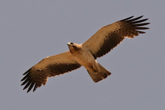 European Wildlife Tours
